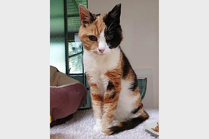 Пропавшая кошка нашла хозяйку через 12 лет и оказалась ненужной