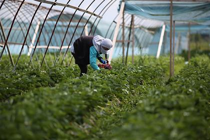 На поддержку подмосковных сельхозпроизводителей выделили 50 миллионов рублей