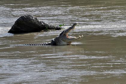 Мужчина спас глухого мальчика из кишащего крокодилами канала