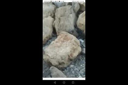 Бегающие по пляжу на российском курорте крысы попали на видео