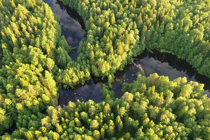 Российские леса оказались дороже нефти