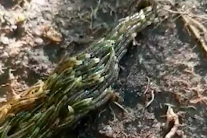 Сотни личинок слились в огромную змею и поползли по храму