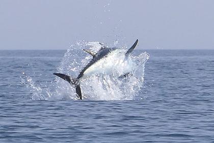 Cамая дорогая в мире рыба выпрыгнула из воды и поразила каякера