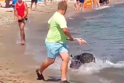 Дикий кабан выплыл из моря и посеял хаос на общественном пляже