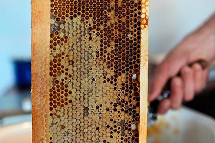 Подмосковный мед проверили на безопасность