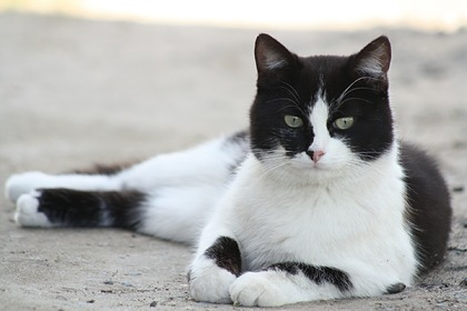 Бродячий кот стал талисманом полицейского участка