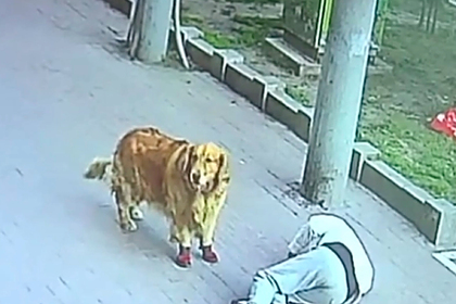 Упавший с неба кот изувечил пенсионера и нарвался на его пса
