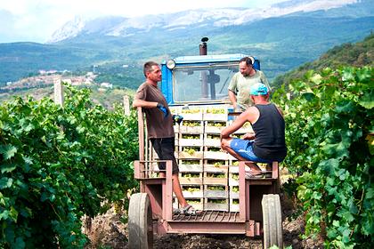 Севастопольских аграриев научат увеличивать продажи и повышать прибыль