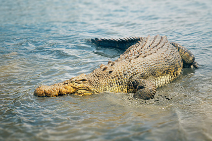 Крокодил растерзал женщину на глазах у золовки и утащил в озеро