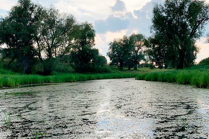 Жителей российских деревень оставили без воды и вынудили пить дождь