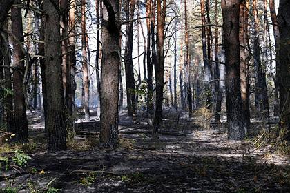 В Бурятии объявили о снижении площади лесных пожаров