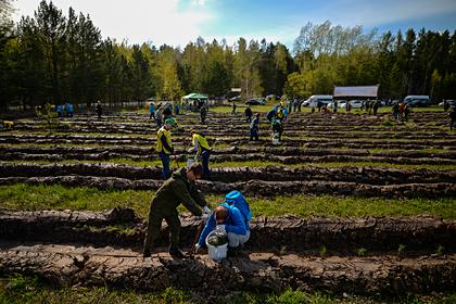 В Тульской области высадят около 20 тысяч деревьев
