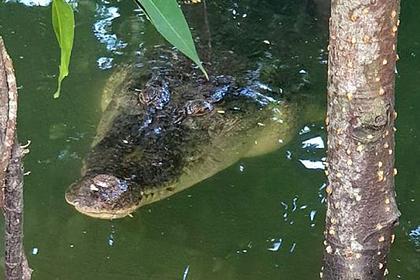 Смертельно опасный крокодил притаился в паре метров от детей и попал на видео
