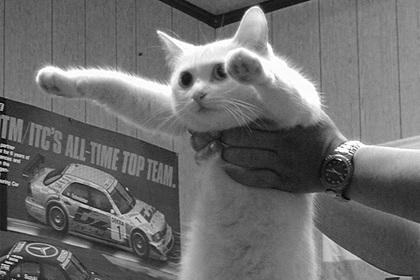 Умер легендарный кот-мем