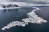 Большинство морских пейзажей Арктики не обходится без морского льда. Он удивляет разнообразием цветов, форм, размеров и даже названий. Ледяные иглы, сало, снежура, шуга, склянка, нилас — все это виды морского льда, выделенные учеными. Смотря на эти причудливые узоры, важно помнить — без арктических льдов невозможно существование не только северных животных, но и всей нашей планеты.