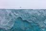 Куда идет этот медведь? Возможно, он ищет дрейфующий лед, на котором сможет добыть тюленя, или надеется встретить партнера для создания семьи. В результате потепления климата периоды открытой воды в Арктике становятся все длиннее, и крупнейший наземный хищник вынужден искать пропитание на суше, все чаще наведываясь в гости к человеку. Чтобы предотвратить возможные столкновения людей и белых медведей, WWF создал по всей Арктике бригады «Медвежьего патруля».