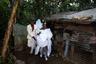 25-летний Сантонакс Туссен и 22-летняя Луисемена Антуан после свадьбы возвращаются из церкви и спешат во двор дома родителей жениха, где продолжится праздник. Когда они придут, родители осыплют их рисом и окропят святой водой на счастье.