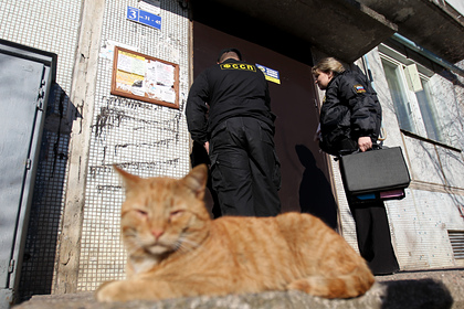 Выбросивший кота из окна ради спасения кошки россиянин получил штраф