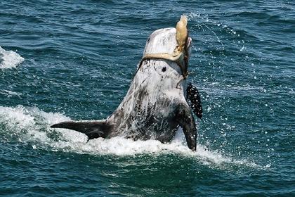 Смертельная схватка дельфина с осьминогом взволновала ученых