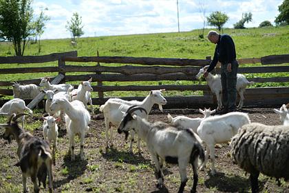 Российские аграрии получили поддержку на десятки миллионов рублей
