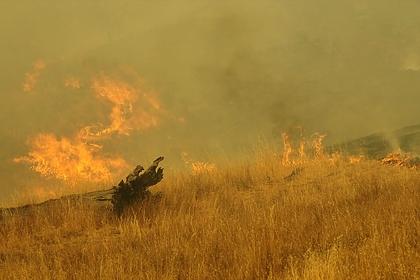 Площадь природного пожара в Ростовской области выросла до ста гектаров