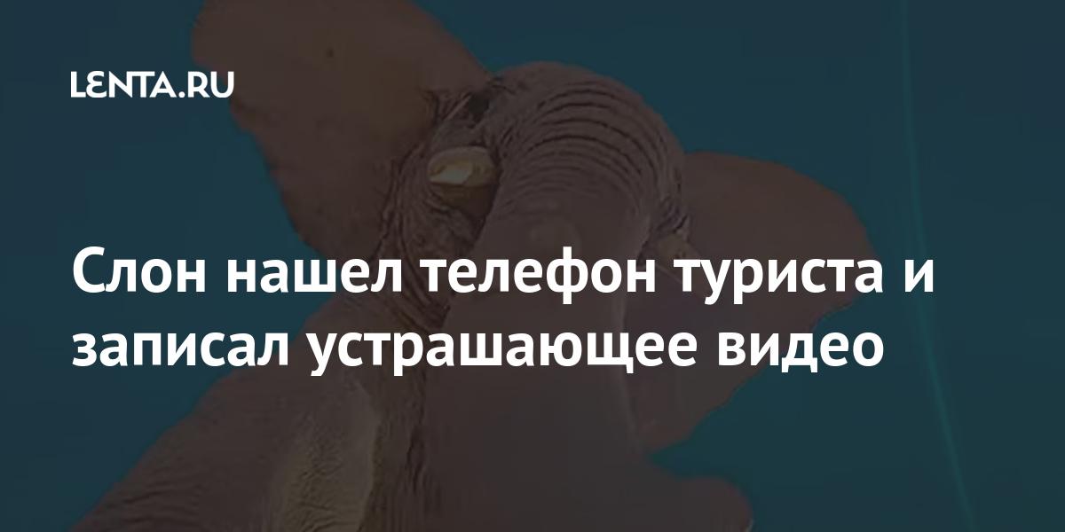Слон нашел телефон туриста и записал устрашающее видео