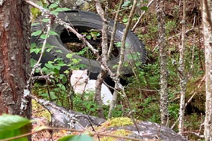 Домашний кот в России прошел 240 километров и достиг полярного круга