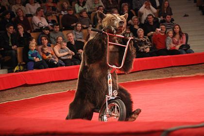 Стали известны подробности нападения медведя на ребенка в цирке-шапито