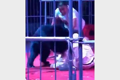 Огромный медведь вцепился в артиста во время циркового шоу и попал на видео
