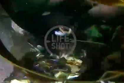 Дайвер показал морское дно возле Камчатки со словами «все сдохло»