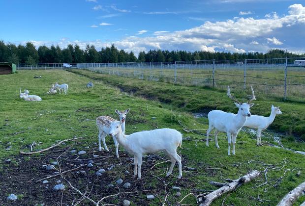 Карельский зоопарк в поселке Киркколахти
