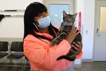 Кошка вернулась к хозяйке через пять месяцев после разрушительного пожара