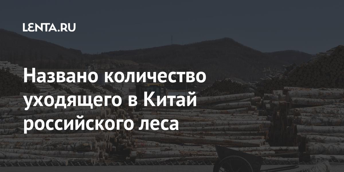 Названо количество уходящего в Китай российского леса