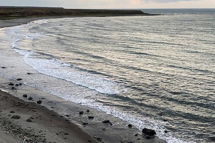 Вице-президент РАН заявил о хорошем состоянии морских млекопитающих на Камчатке