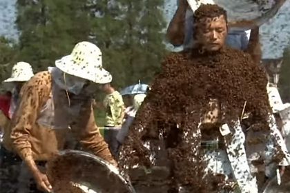 Мужчина покрыл себя 63 килограммами живых пчел и вошел в историю