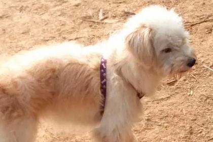 Забытая владельцами собака прошла 60 километров и вернулась домой