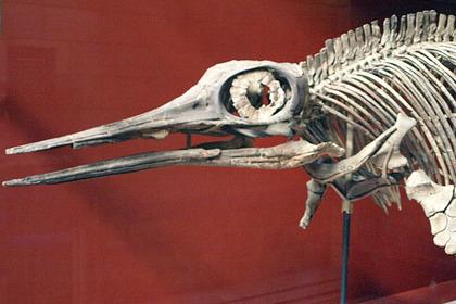 Скелет ихтиозавра