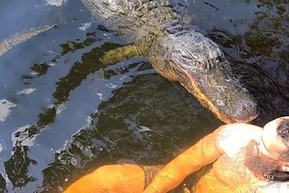 Мужчина поплавал в озере с четырехметровым аллигатором и попал на видео