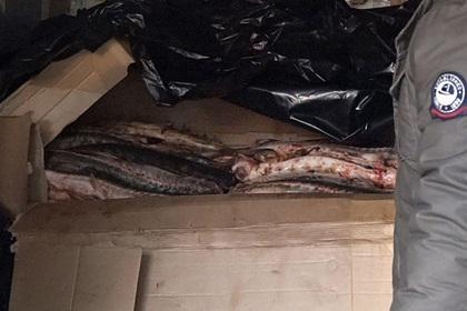 Оперативники ФСБ перекрыли поставку контрабандной осетрины в Москву