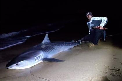 Рыболов 80 минут вытаскивал 320-килограммовую тигровую акулу из воды
