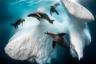 Айсберги — это не просто глыбы льда, но и своего рода жилища для морских обитателей. Так, почти круглый год на них живут тюлени-крабоеды. Передвижениями по океанам айсберги обогащают воду, так как содержат в себе полезные вещества, которые имеются только на суше. Их ценность для окружающей среды и запечатлел фотограф Грег Лекер (Greg Lecoeur), выиграв главный приз конкурса.