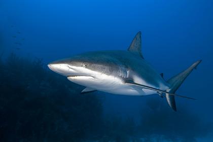 Разъяренная акула напала на подростка и изувечила его