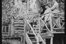 Немецкие офицеры с собакой возле входа в штаб. Западный фронт, 1916 год.
