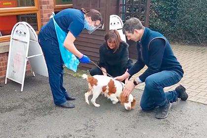 Трогательная встреча семьи с пропавшей шесть лет назад собакой попала на видео