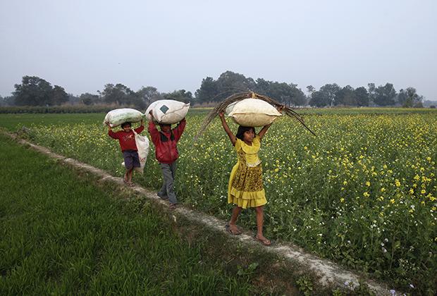 Дети с мешками на горчичном поле в штате Уттар-Прадеш, Индия