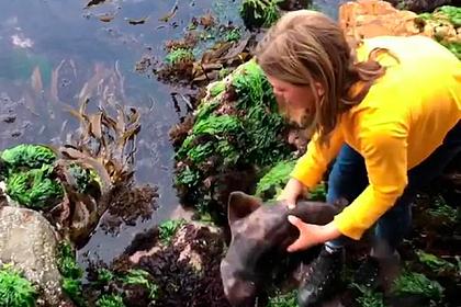 11-летняя девочка голыми руками вытащила застрявшую в камнях акулу и спасла ее