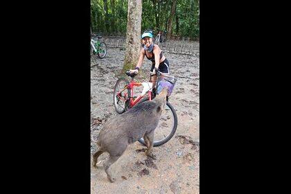 Дикий кабан украл у велосипедистки слойки и попал на видео