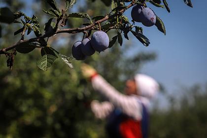 Уральские ученые получили новое оборудование для исследований растений