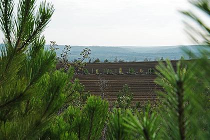 В России за осень высадили 40 миллионов деревьев
