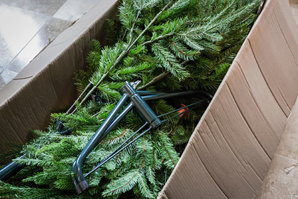 Врач рассказала об опасности новогодней елки